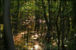 Flooded Woods by bamako