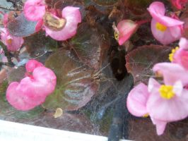 House Spider invades garden by Sid-Jay
