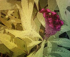 Updated. Plant 7 by jennystokes