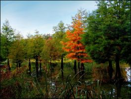 First Autum Colors... by MichiLauke