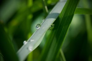 Hidding droplets by Zoltaniev