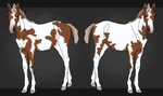 Tovero foal for sale - CLOSEDE by Pine-Hollow-Ranch
