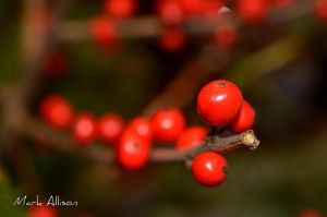Winter fruit by Mark-Allison
