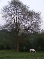 Tree and White Horse by Witchling-V