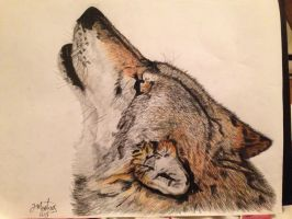 Howling European wolf by TiffMootrey
