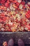 Crumpled Leaves of Autumn by xsilver-cloudx