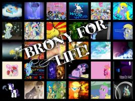 Brony For Life! by kayleyster