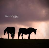 Horses by Initio