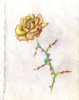 Italy 06 October rose by Anastasia-Artist