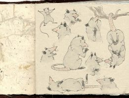 art book - possums by luve