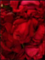 my love is like a red rose by Preettisen