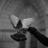 Trust in peace by Yousry-Aref