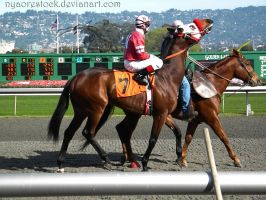 Golden Gate Fields - Racers 46 by Nyaorestock