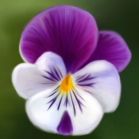 Pansy by Sorceress2000
