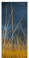 Golden Grass, Grey Sky by youngbeth