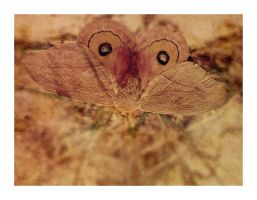 A Moth is not a Butterfly by hell0z0mbie