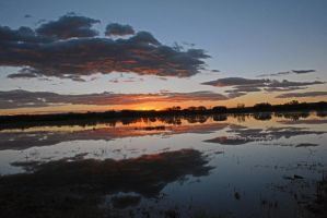Sunrise at the Bosque by MorrighanGW