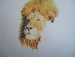 lion 4 by fmgudin