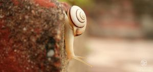 travel of a snail - 004 by Bheeshoom