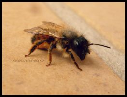little honeybee by xXxSILLYxBERRYxXx