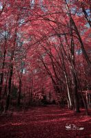 red forrest by greenfeed