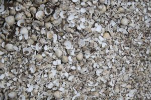 SMD Texture 1: Shell Floor by Spicy-Monster