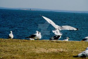 Coming in for a landing..... by TriciaStucenski