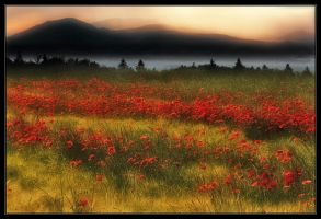 Sunset in Black Forest by Hartmut-Lerch