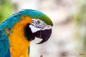 Parrot by reddes