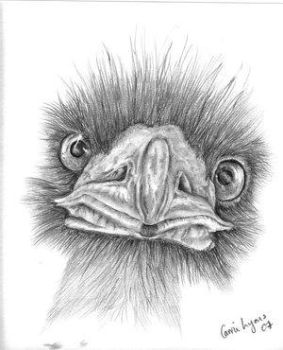 Emu Drawing by TheArtsClub