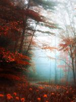 Fantasy forest - stock by Aeternum-designs