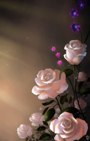 White roses by Ionixis