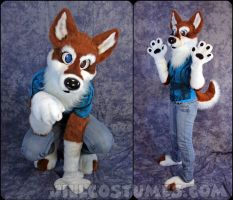 Colorado Husky by jillcostumes