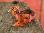 Snap Dragonet - Fall Leaf Dragon by Chaotica-I