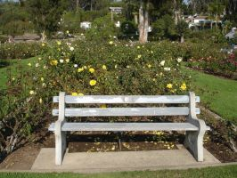 Rose garden bench by Stock-By-Crystal