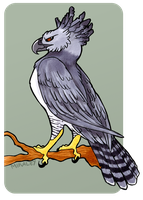 Just an ordinary Harpy Eagle by Mikaley