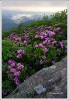 Jane Bald View by TRBPhotographyLLC