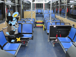 Luxio in a public bus by S-M-Batty