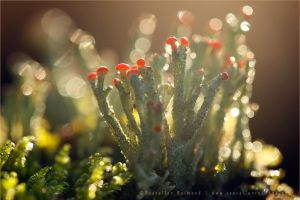 Luminous Lichen by thrumyeye