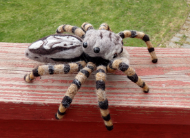 Tan Jumping Spider Wall Decor by DancingVulture