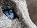 Cats eye by IRSart