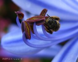 organs and the bee by sinanTR