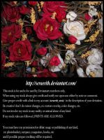 White and red roses by Seraerith-stock