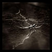 Spider by kiora