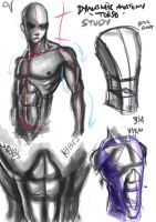 Dynamic anatomy studies by lijohn321