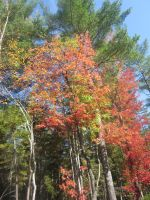 Fall Foliage - 19 by ShadowManipulator7