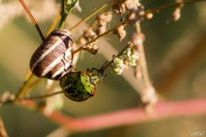 Love between a bug and a snail by MCL28