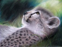 Cheetah by AmberBrown2016