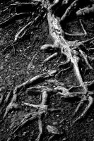 Roots by Scotophobic