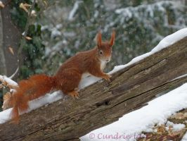Squirrel 19 by Cundrie-la-Surziere